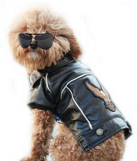 Одежда для собак интернет магазин ZveroMODA - Россия.