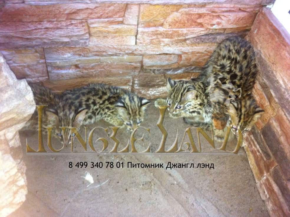 Котята 1 5 месяца фото