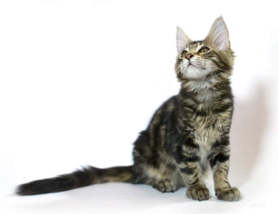 фото маленьких котят 1 месяц #11