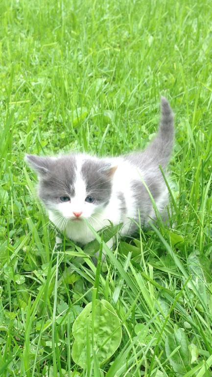 Отдам котят в хорошие руки 2012 смотреть онлайн