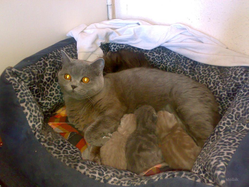 Новорожденные котята (13 фото)